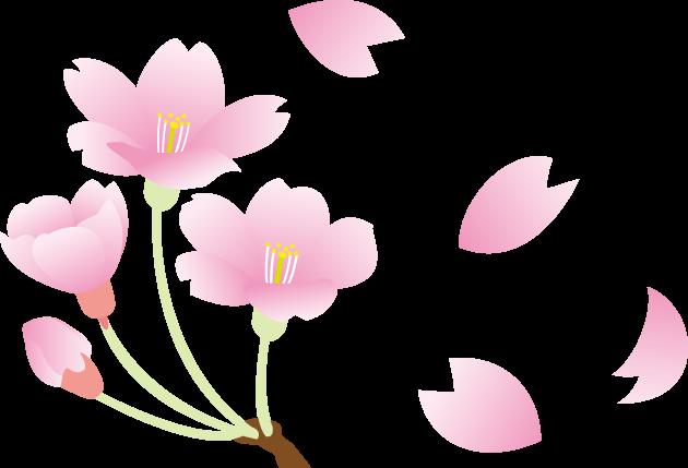 3月27日桜の日のイラスト-桜と桜の花びら
