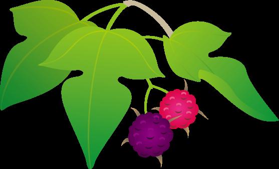 桑の日のイラスト-桑の葉と桑の実
